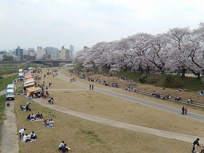 2018.4.2 足羽川の桜3