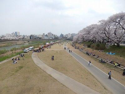 2018.4.2 足羽川の桜2