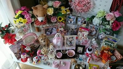 2018.5.14道端アビちゃん個別供養13