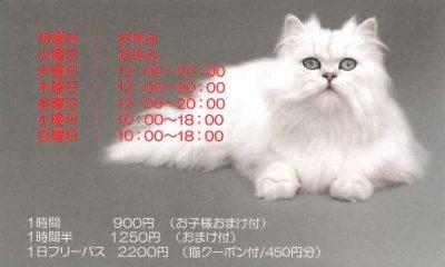 猫カフェ cat village キャットヴィレッジ 名刺型チラシ 裏2
