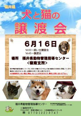 2018.6.16 福井県動物管理指導センター嶺南支所 譲渡会チラシ