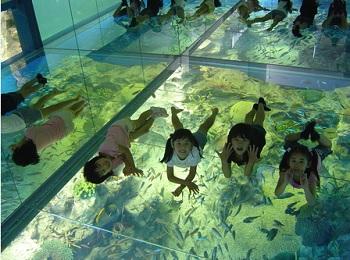 松島水族館チラシ写真2
