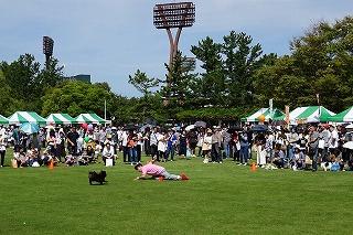 2018.9.23日 石川県動物愛護フェスティバル15-2