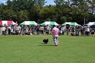 2018.9.23日 石川県動物愛護フェスティバル15