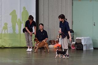 2018.9.22 中央行事 動物愛護ふれあいフェスティバル21