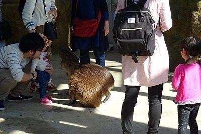 2018 ハピジャン足羽山公園遊園地8