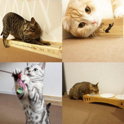 宿と猫 猫ちゃん2