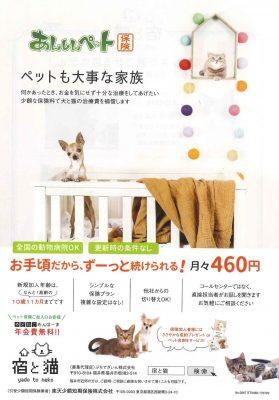 宿と猫 チラシ2
