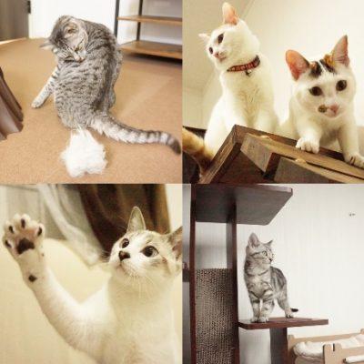 宿と猫 猫ちゃん